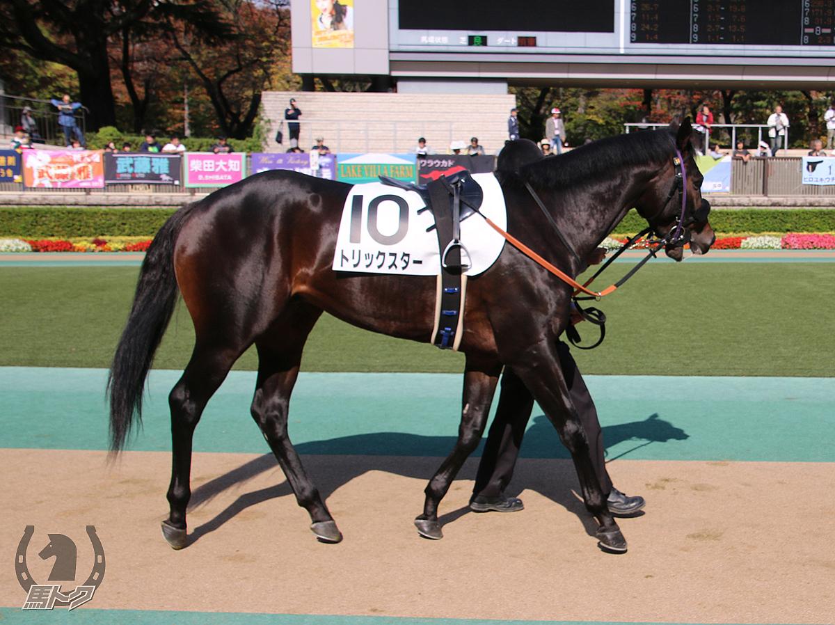 トリックスターの馬体写真