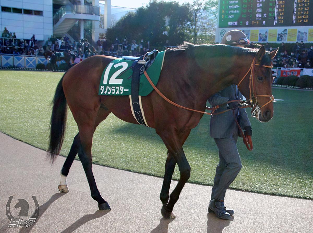 ダノンラスターの馬体写真