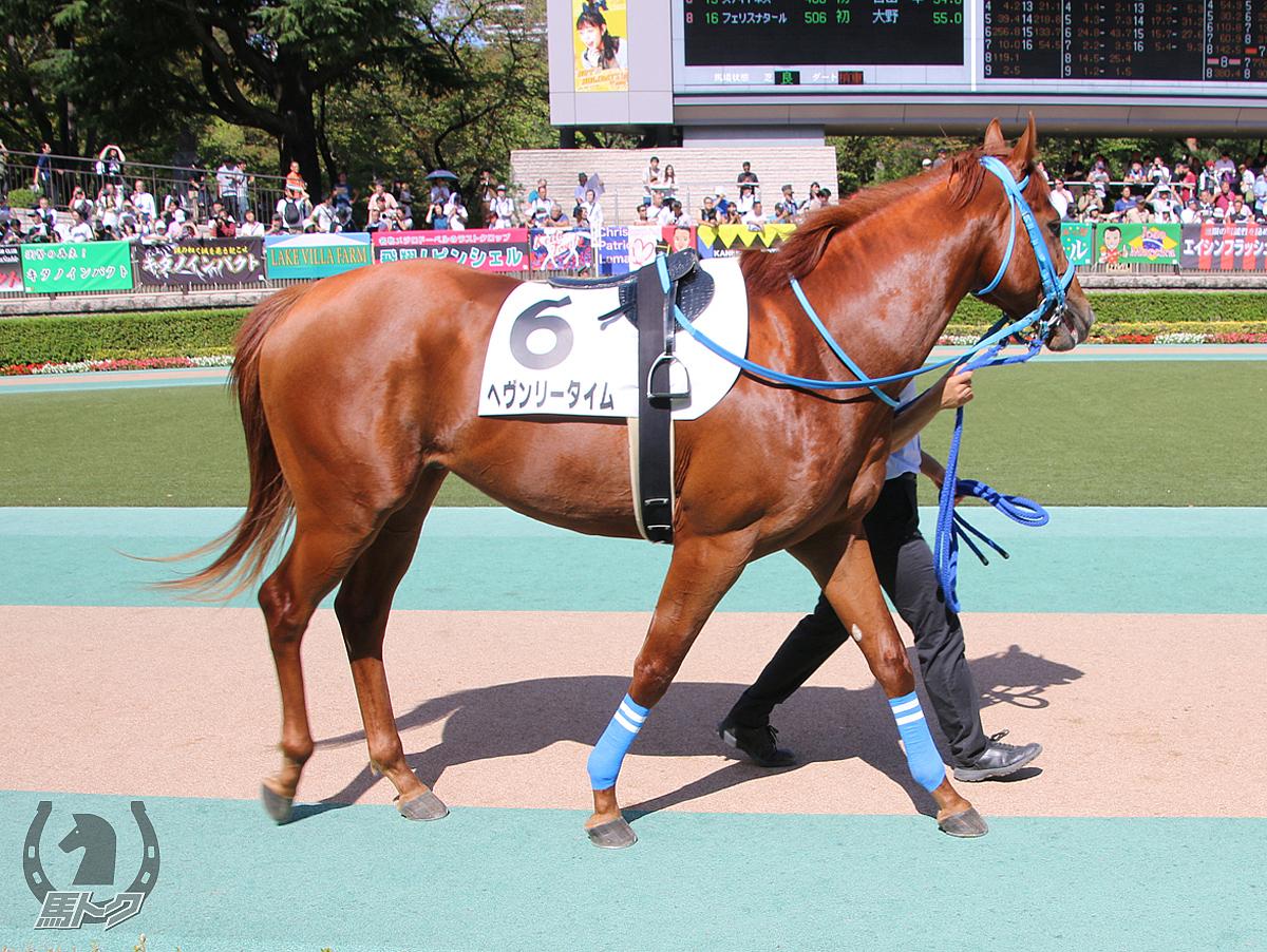 ヘヴンリータイムの馬体写真