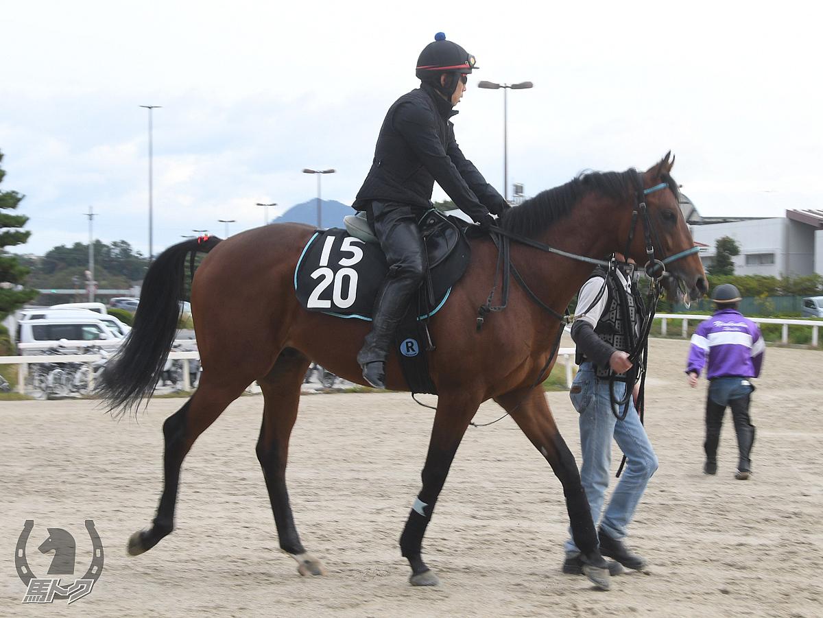 オースミカテドラルの馬体写真