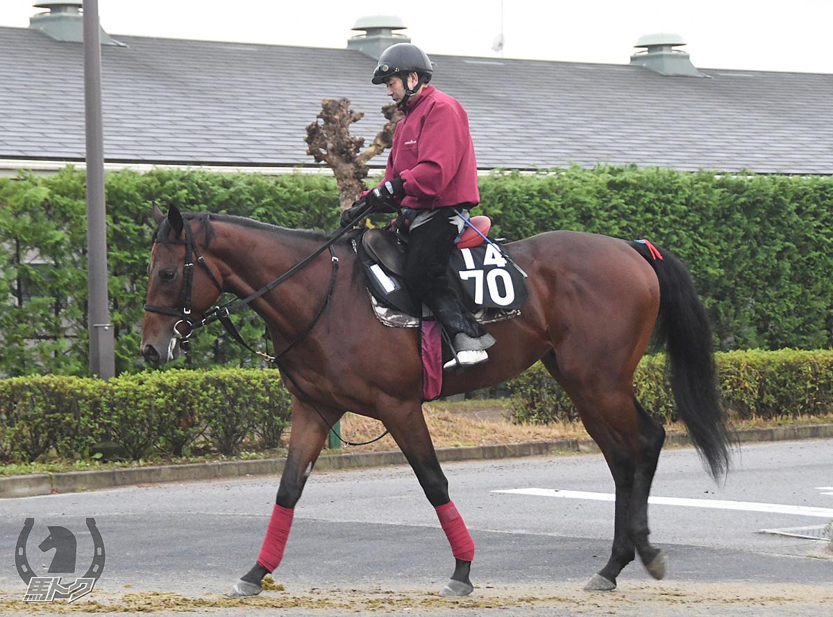 ルプリュフォールの馬体写真
