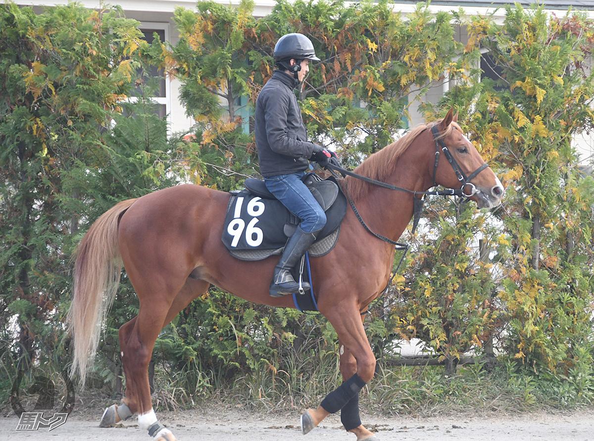 シャドウカンパニーの馬体写真