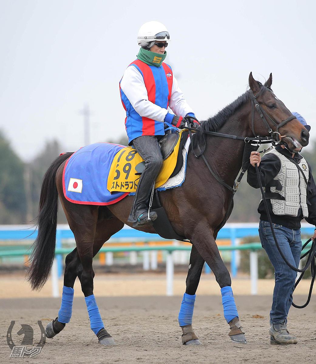 ラストドラフトの馬体写真