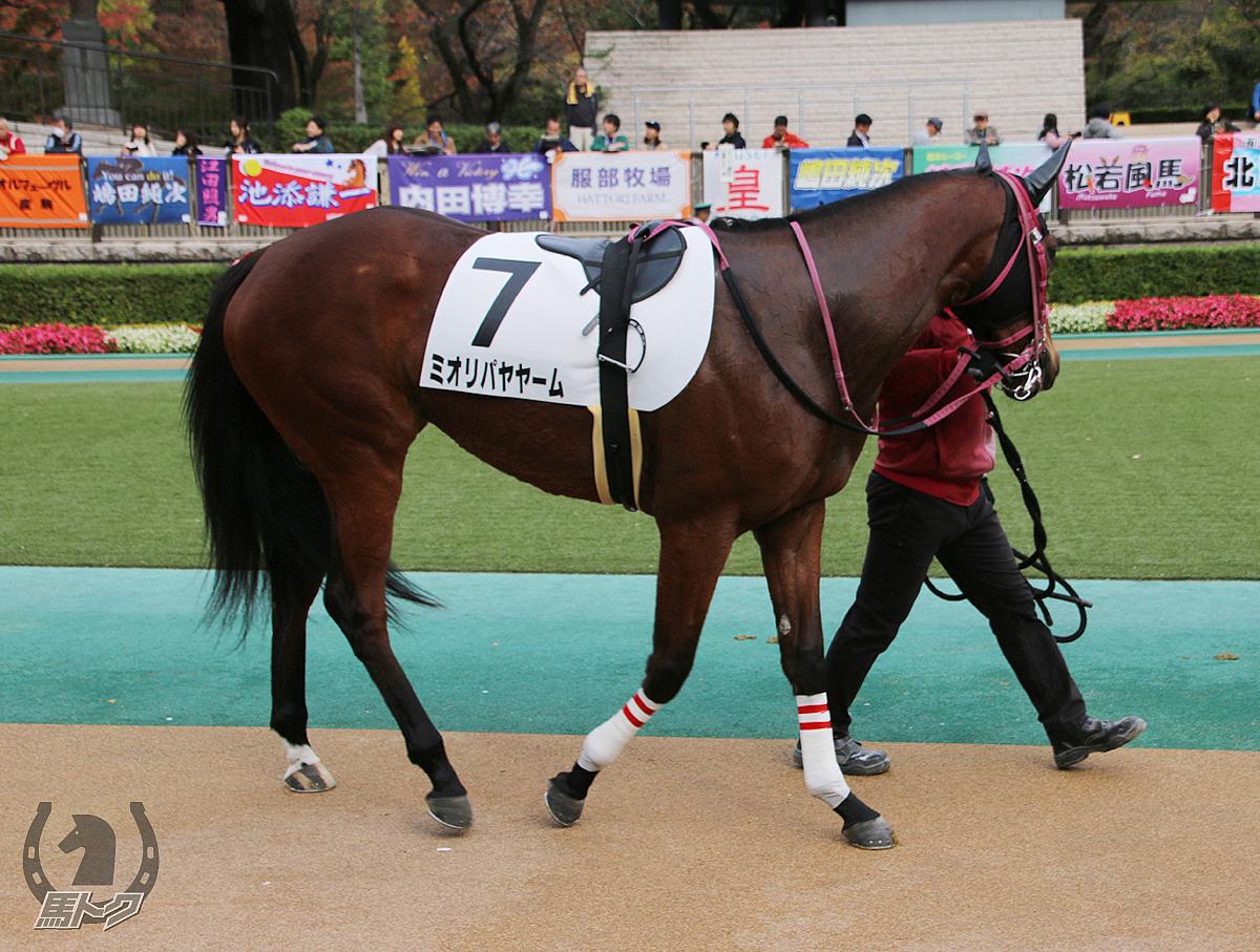 ミオリパヤヤームの馬体写真
