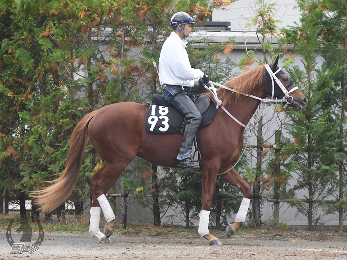 レッドジェニファーの馬体写真