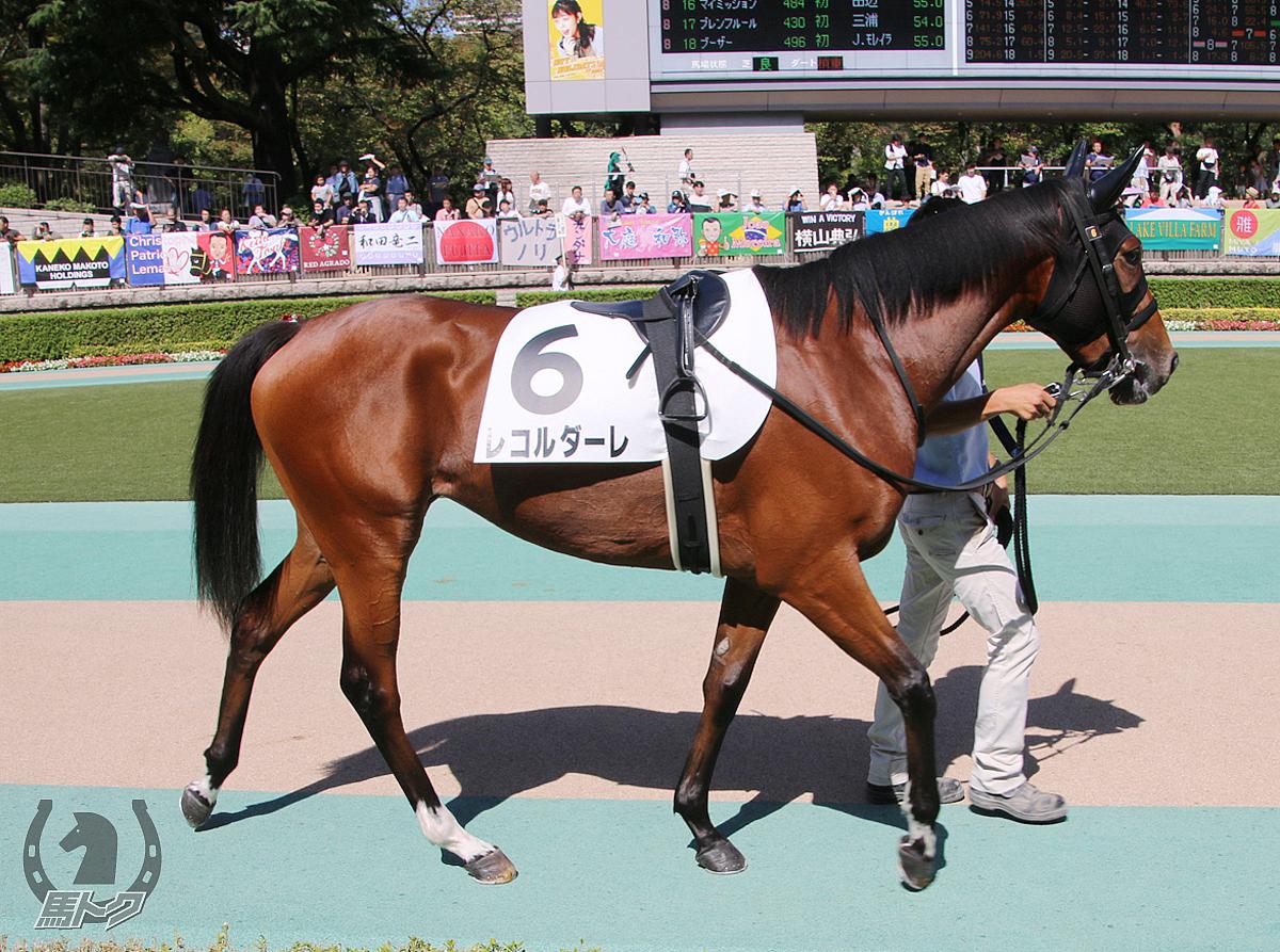 レコルダーレの馬体写真
