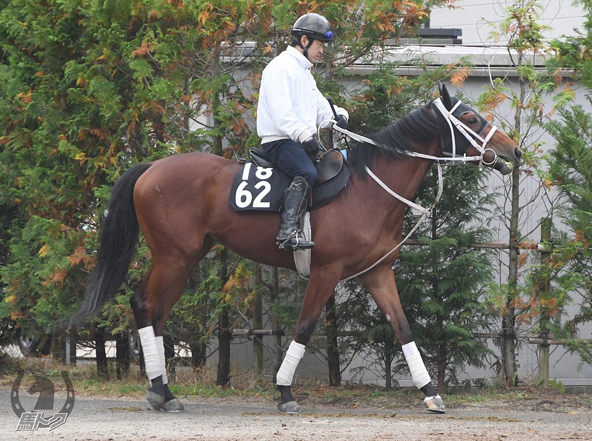 エバーフレイムの馬体写真