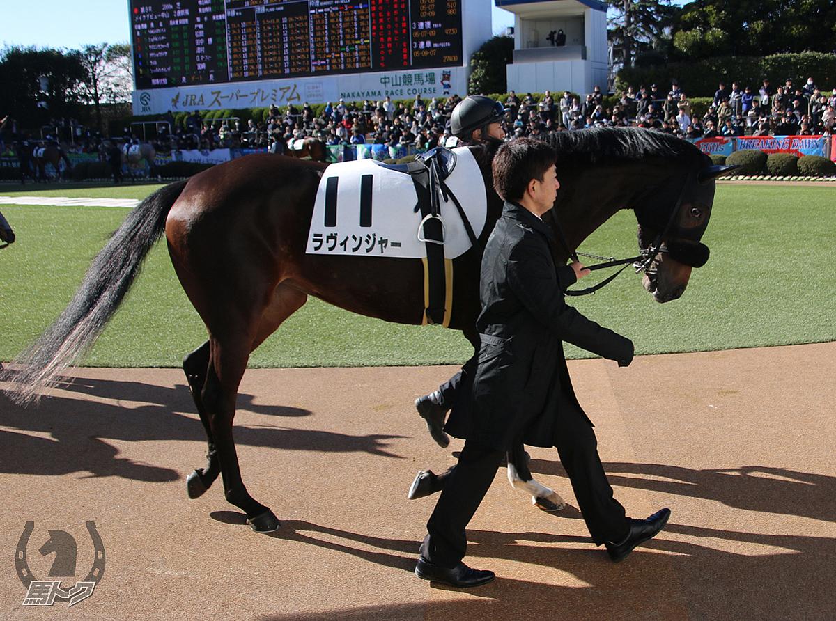 ラヴィンジャーの馬体写真