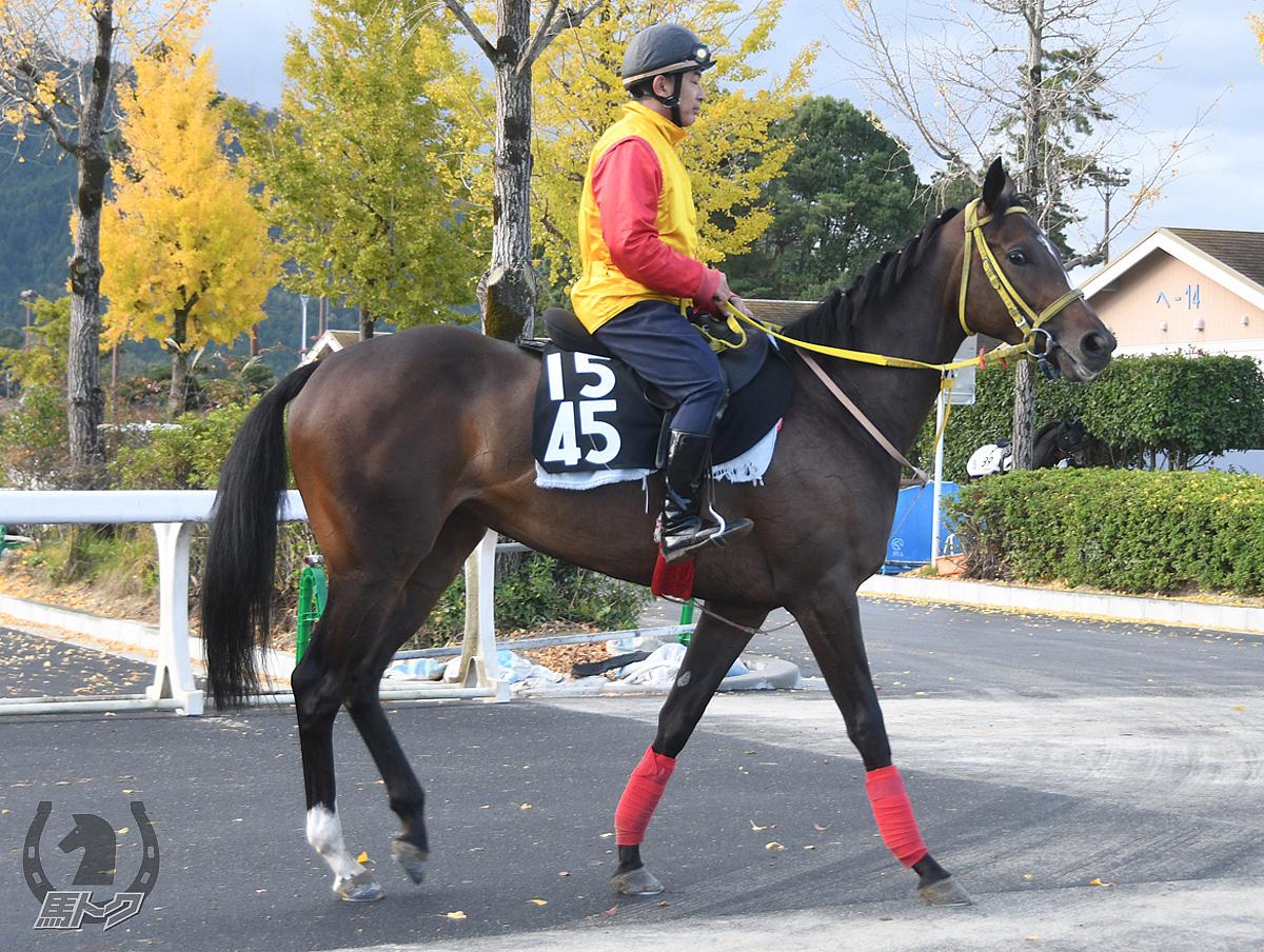 ラプリュベルの馬体写真