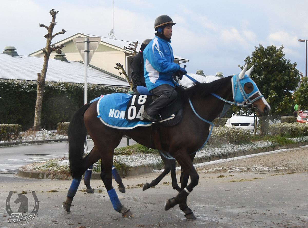 リードザヴァンの馬体写真