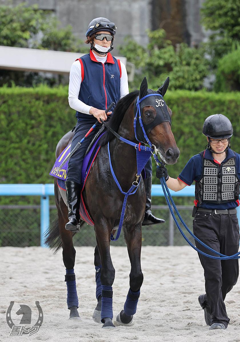 レッドジェニアルの馬体写真