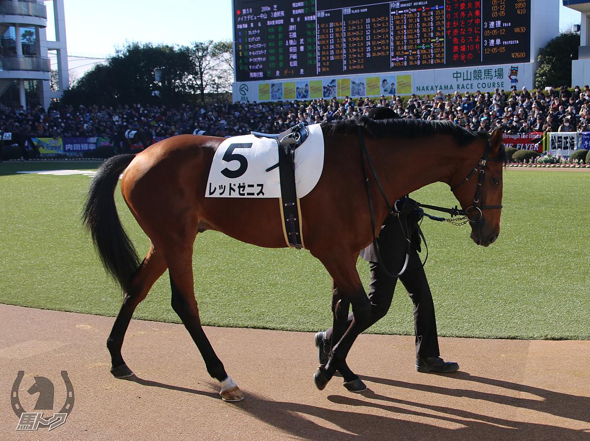 レッドゼニスの馬体写真
