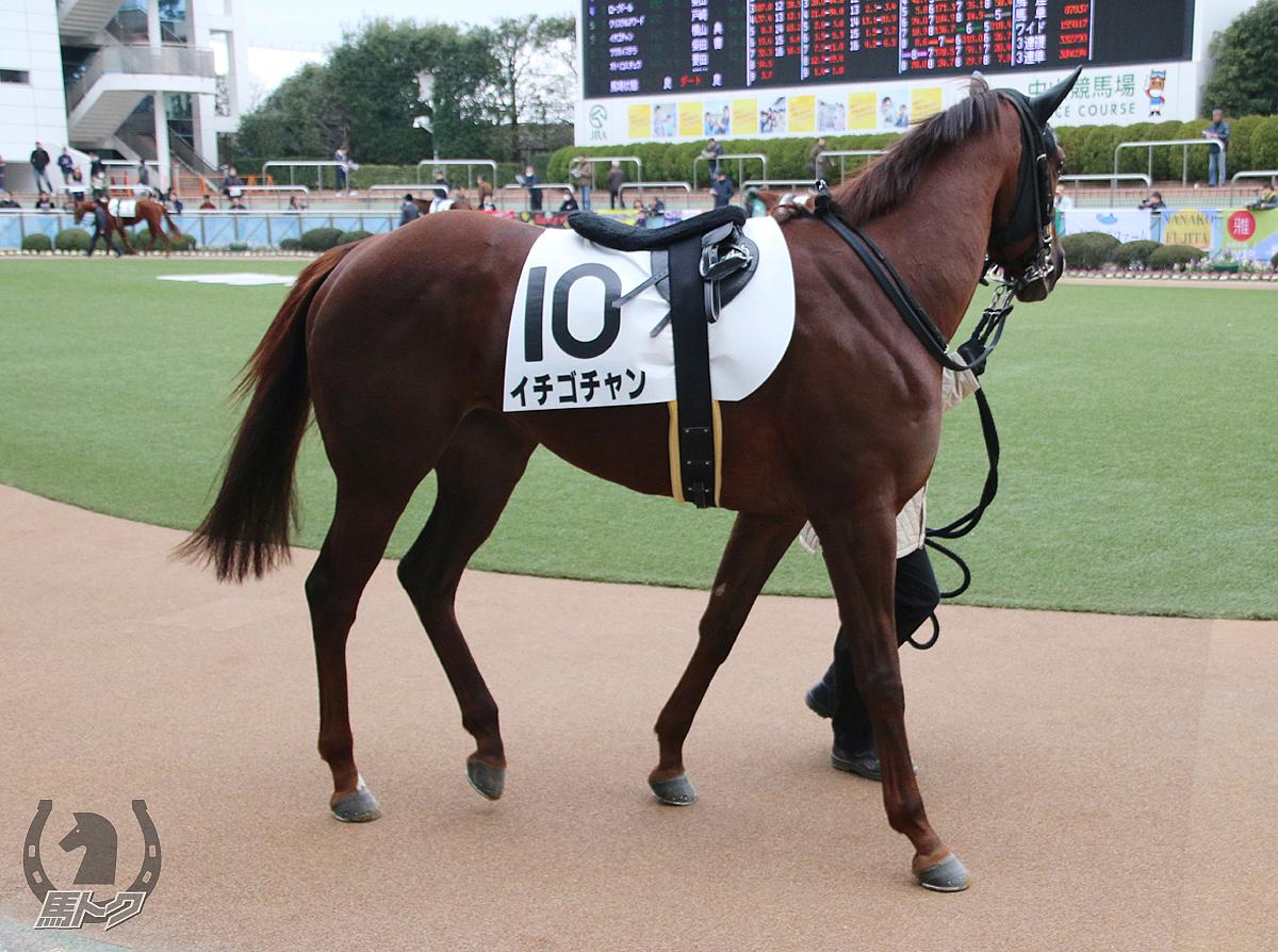 イチゴチャンの馬体写真