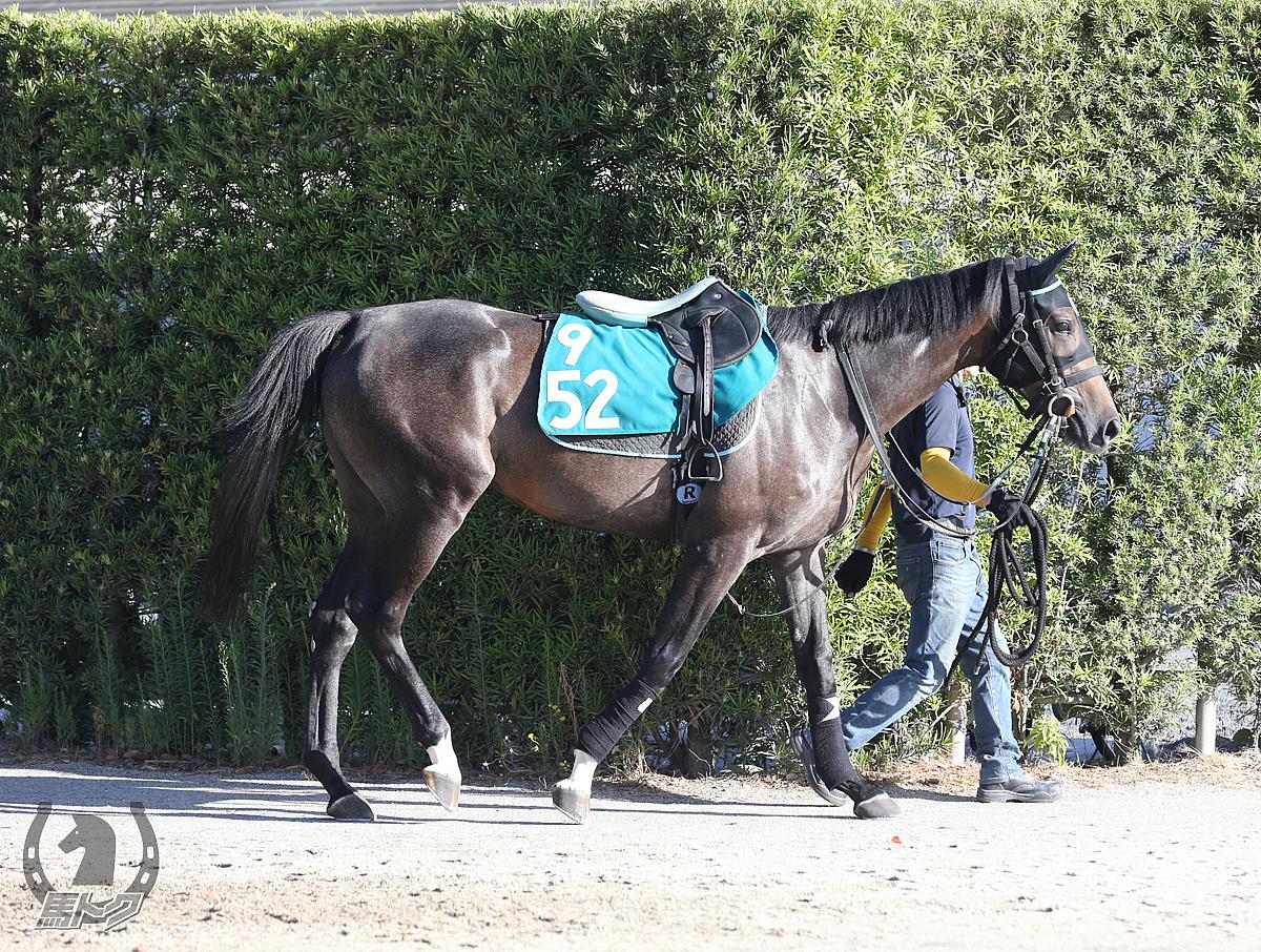 ハーバーコメットの馬体写真