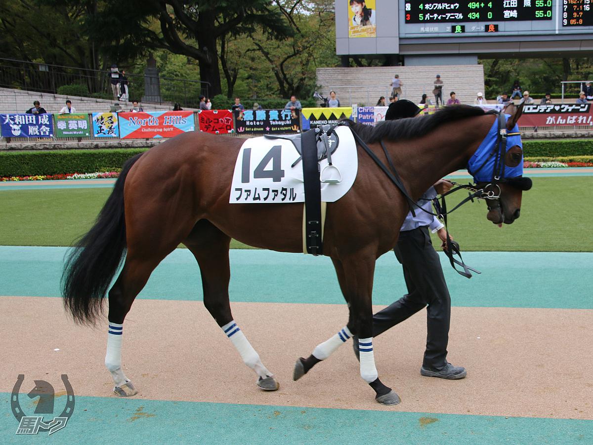 ファムファタルの馬体写真