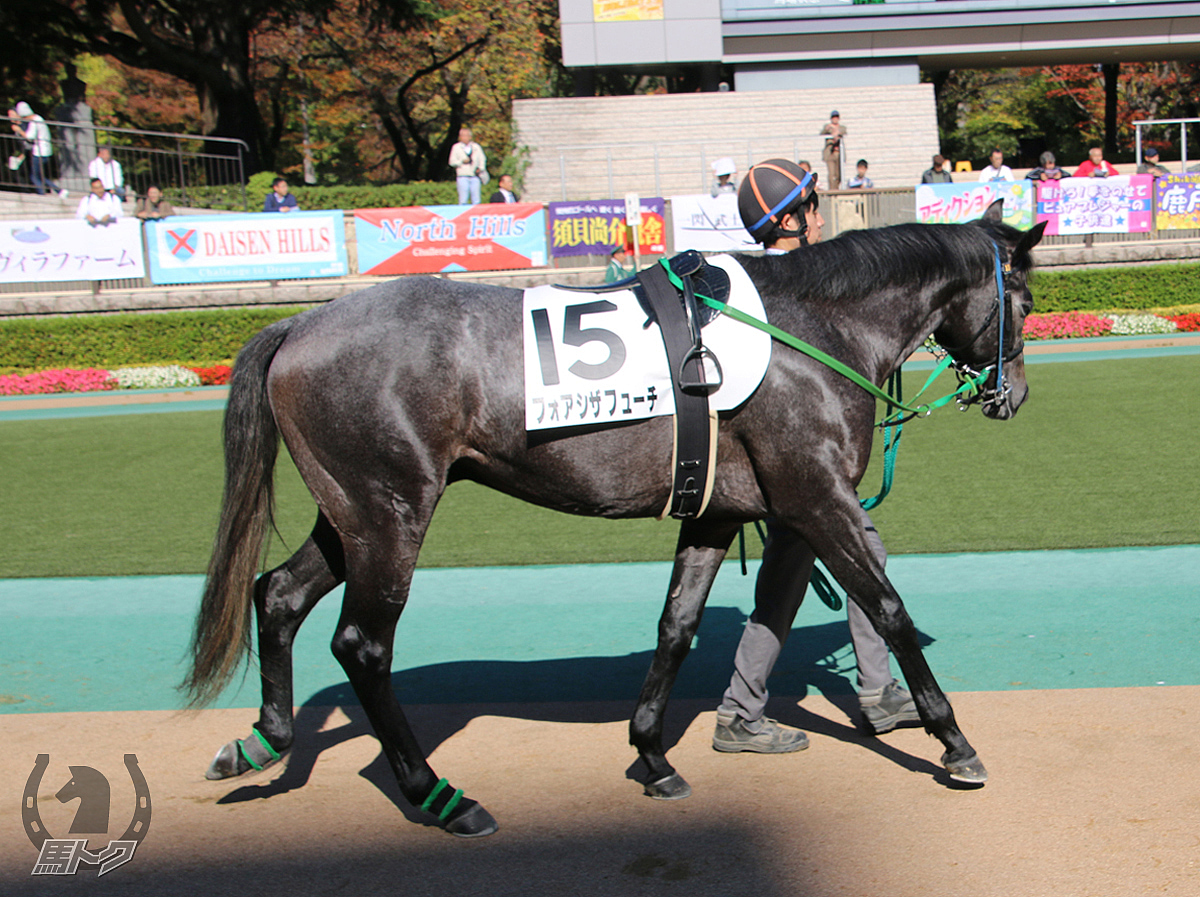 フォアシザフューチの馬体写真