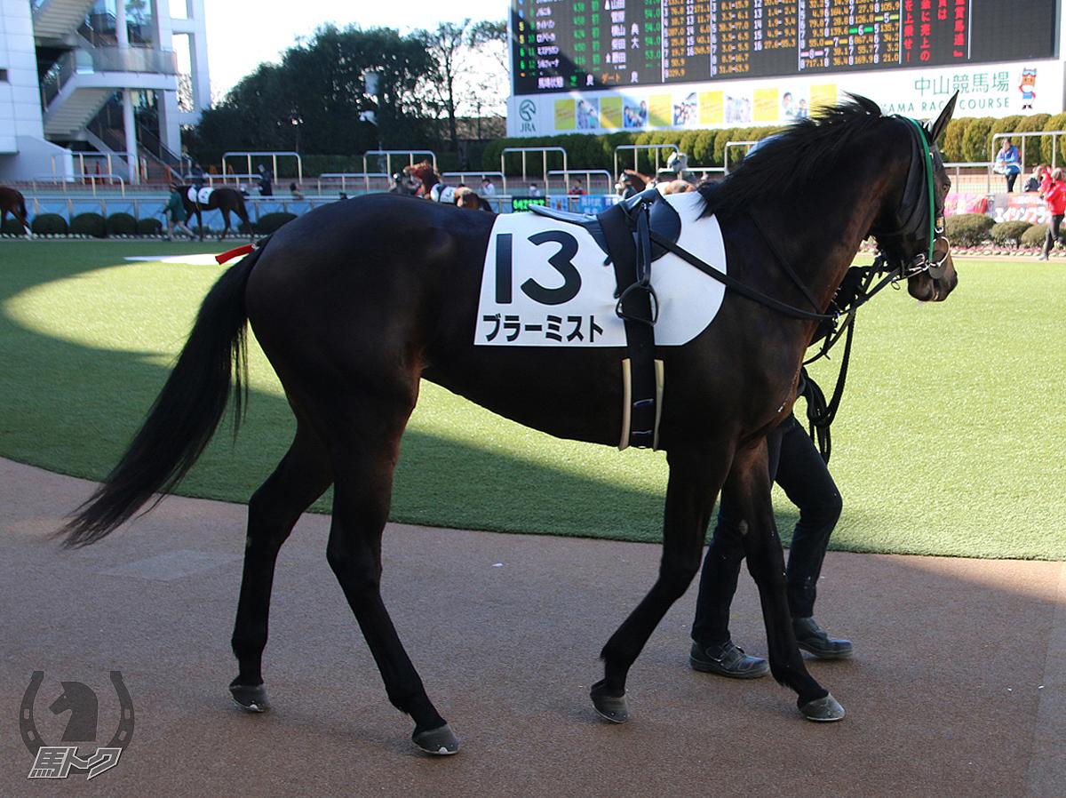 ブラーミストの馬体写真