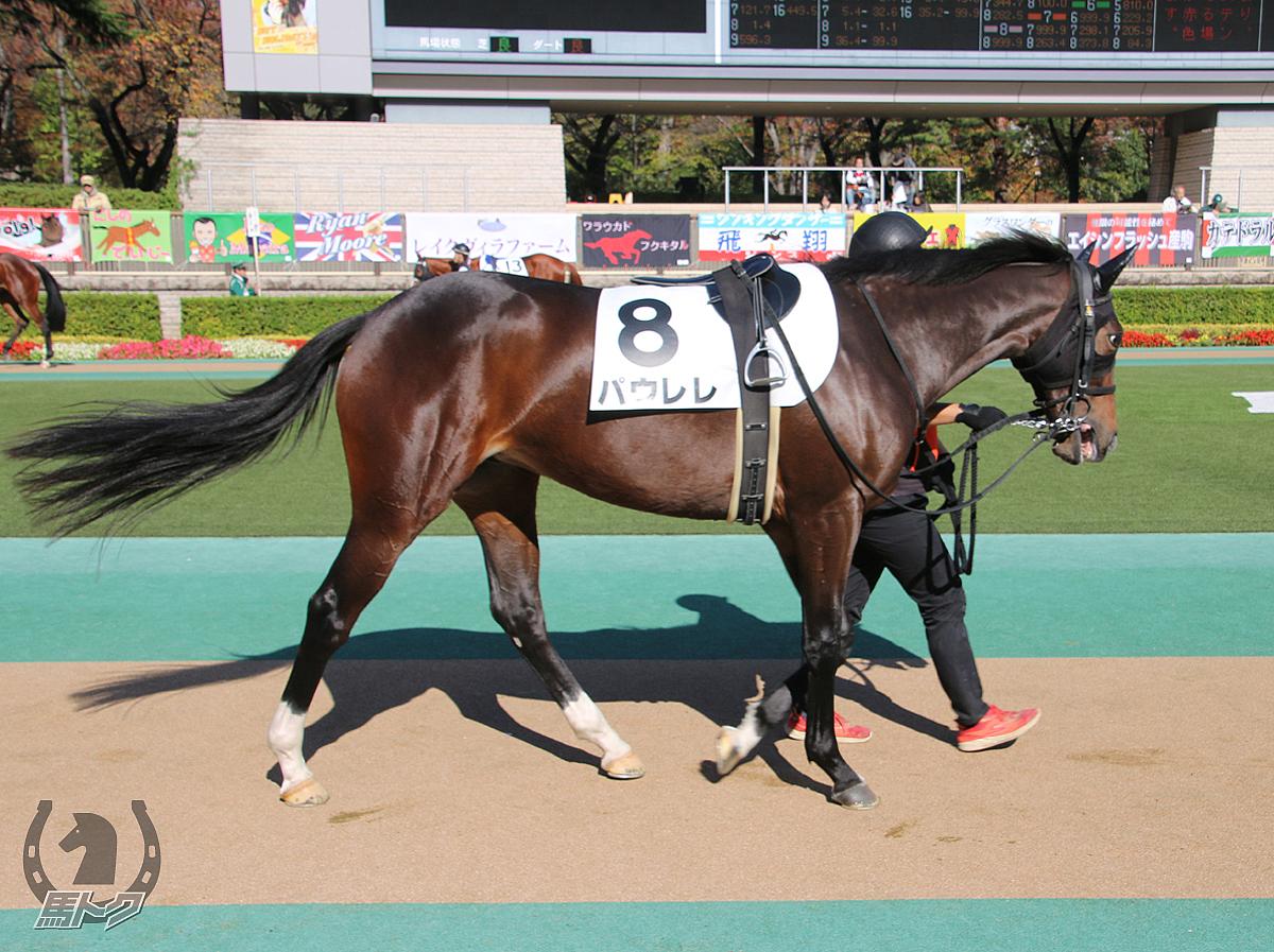 パウレレの馬体写真