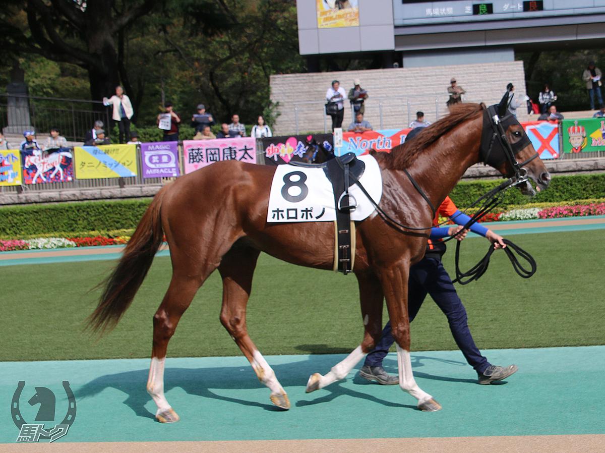 ホロポノの馬体写真