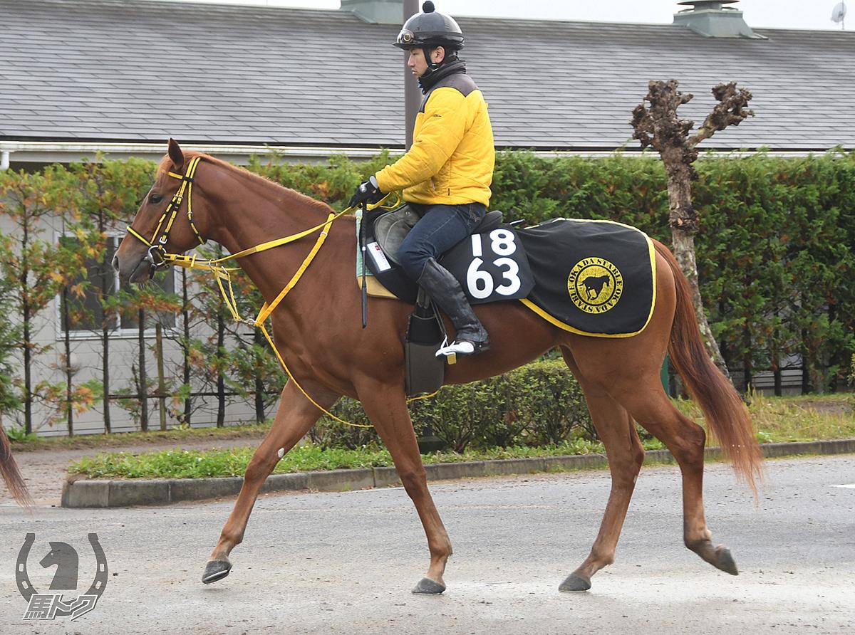 アカネジョウの馬体写真