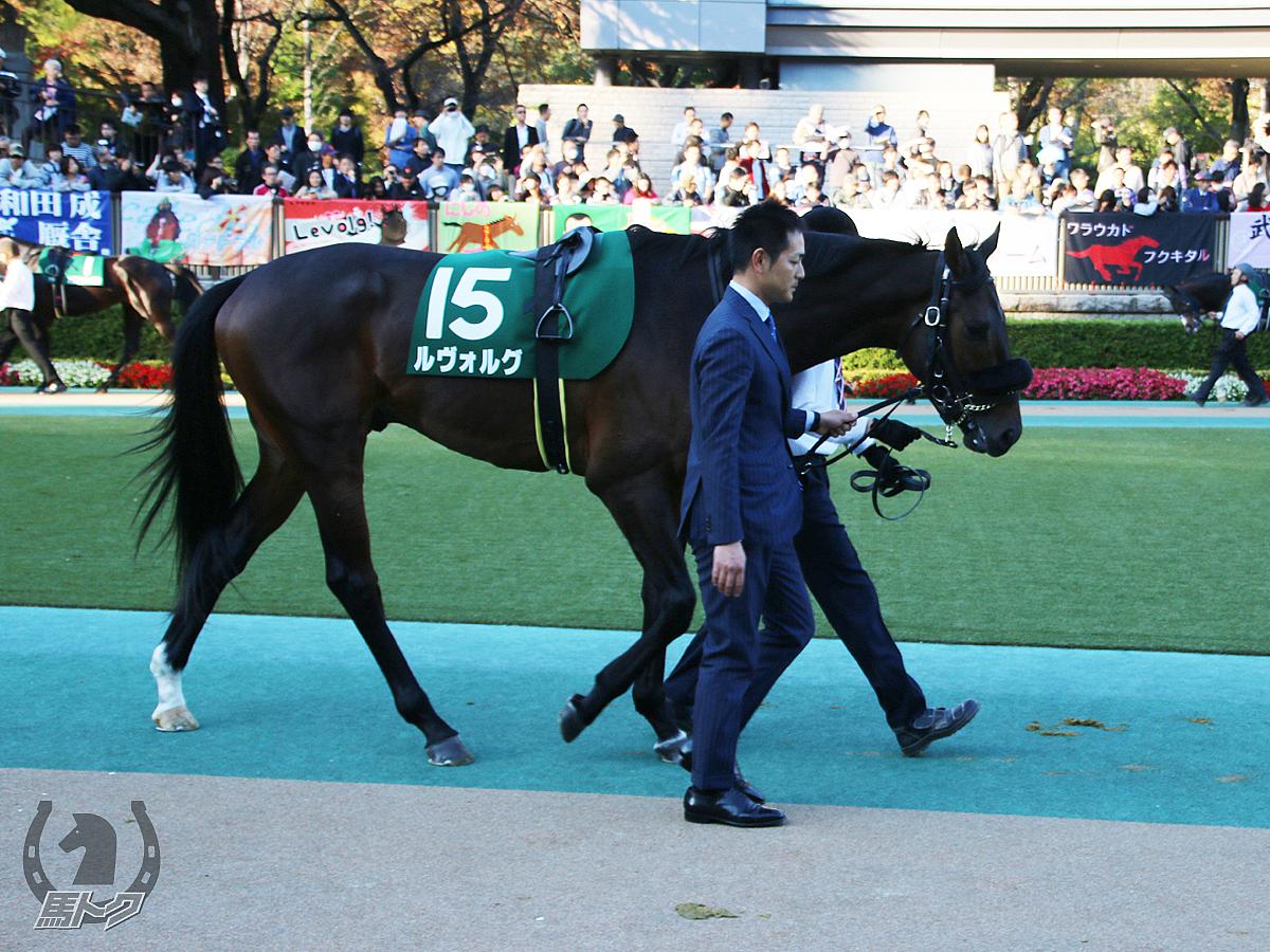 ルヴォルグの馬体写真