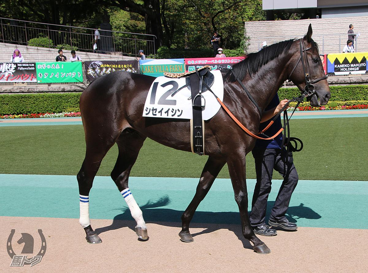 シセイイシンの馬体写真
