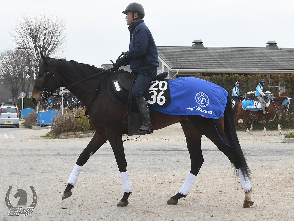 ルチーフェロの馬体写真