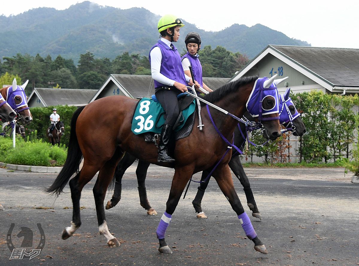 クリノルナマヤの馬体写真
