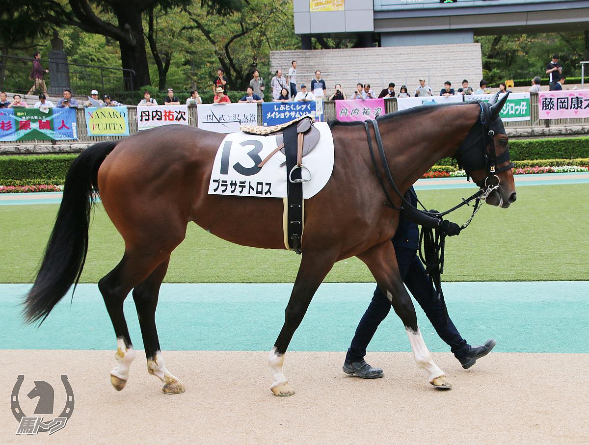 プラサデトロスの馬体写真