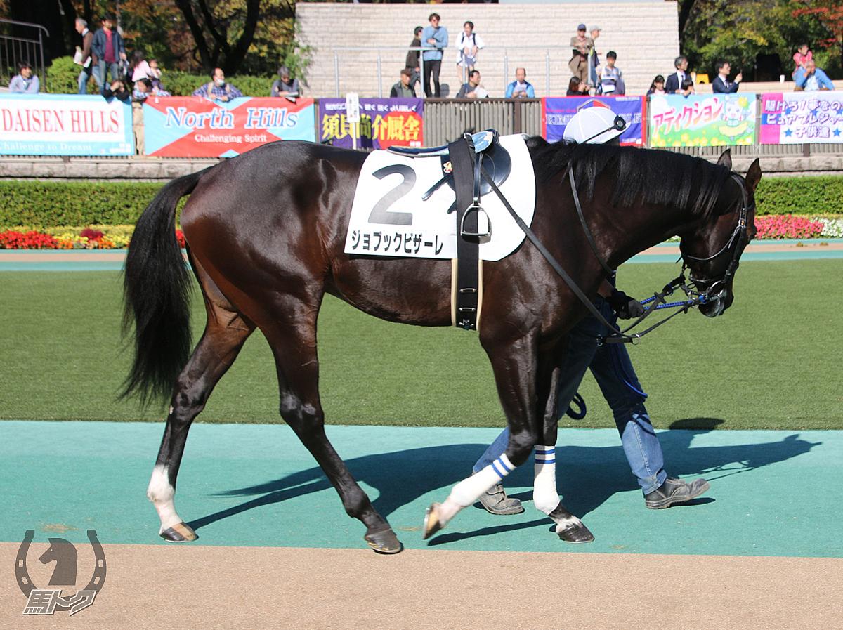ジョブックビザーレの馬体写真