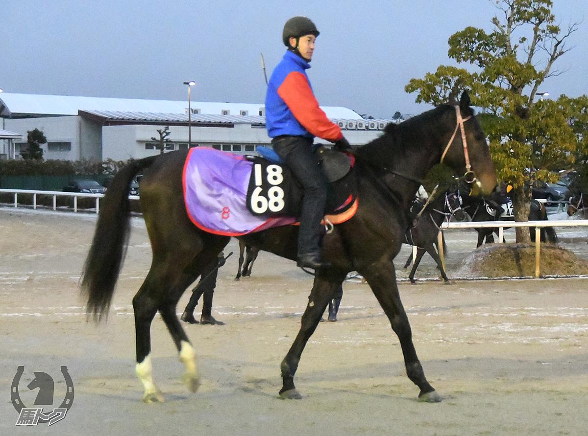 ブルベアテラコッタの馬体写真
