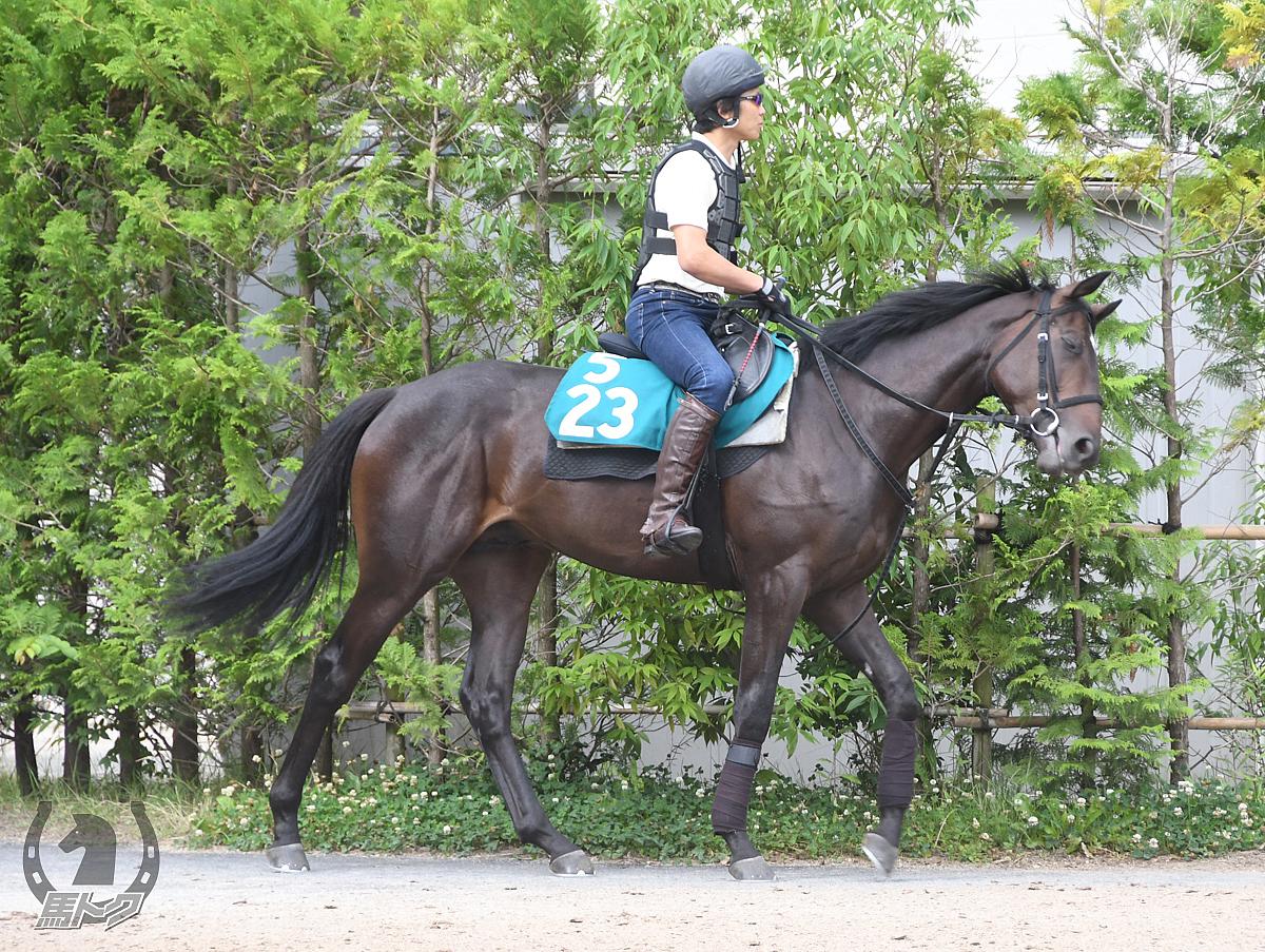 エレヴァルアスールの馬体写真