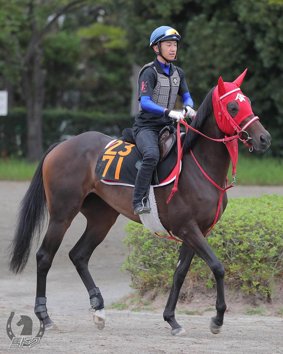 ウエスタンランポの馬体写真