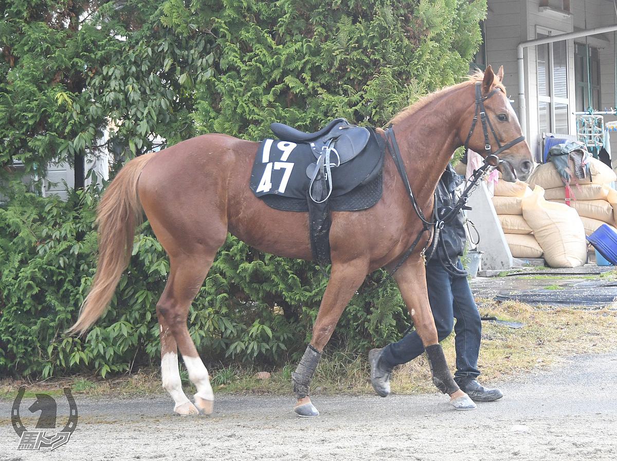 トミケンプロズバの馬体写真