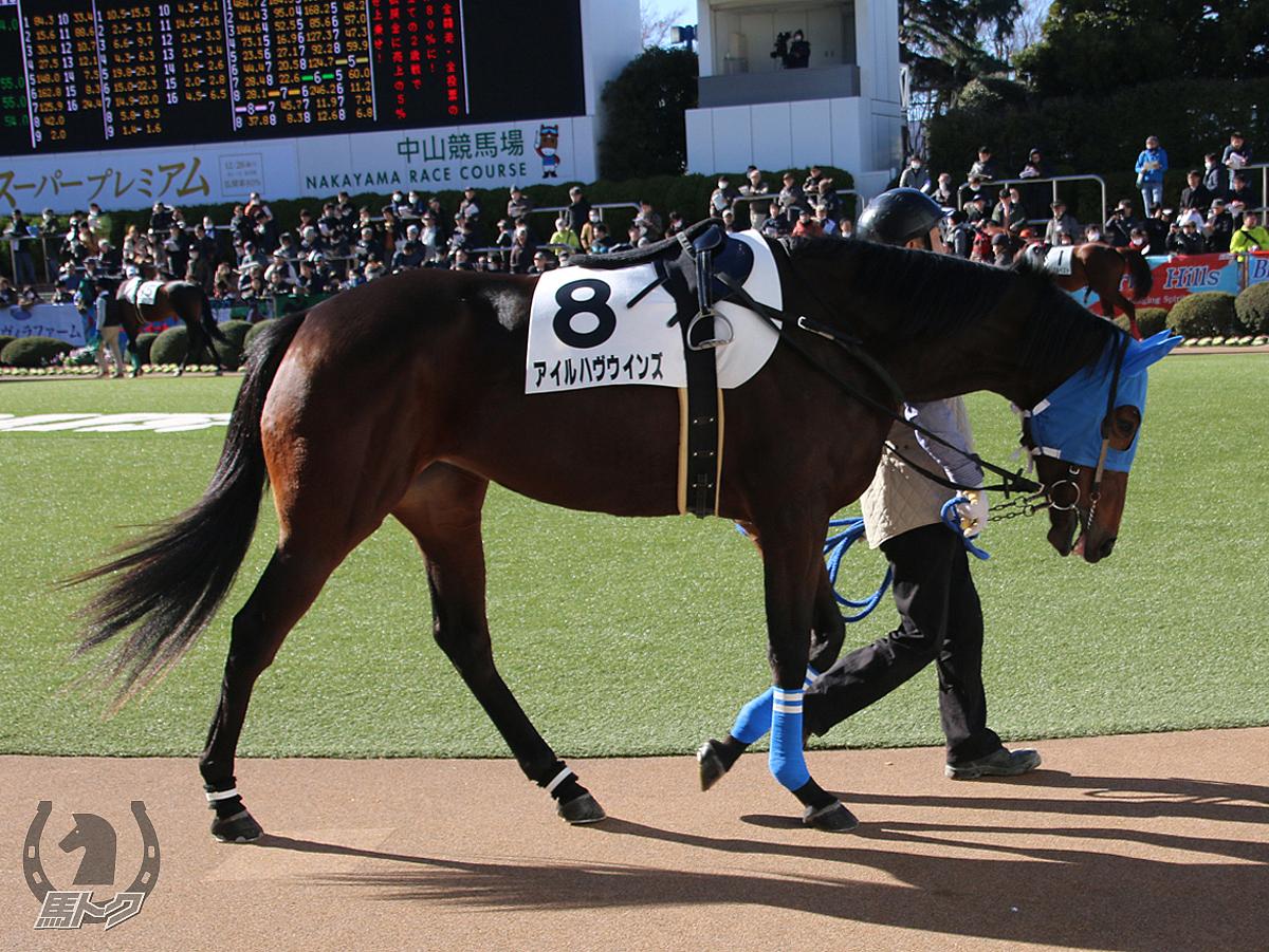 アイルハヴウインズの馬体写真
