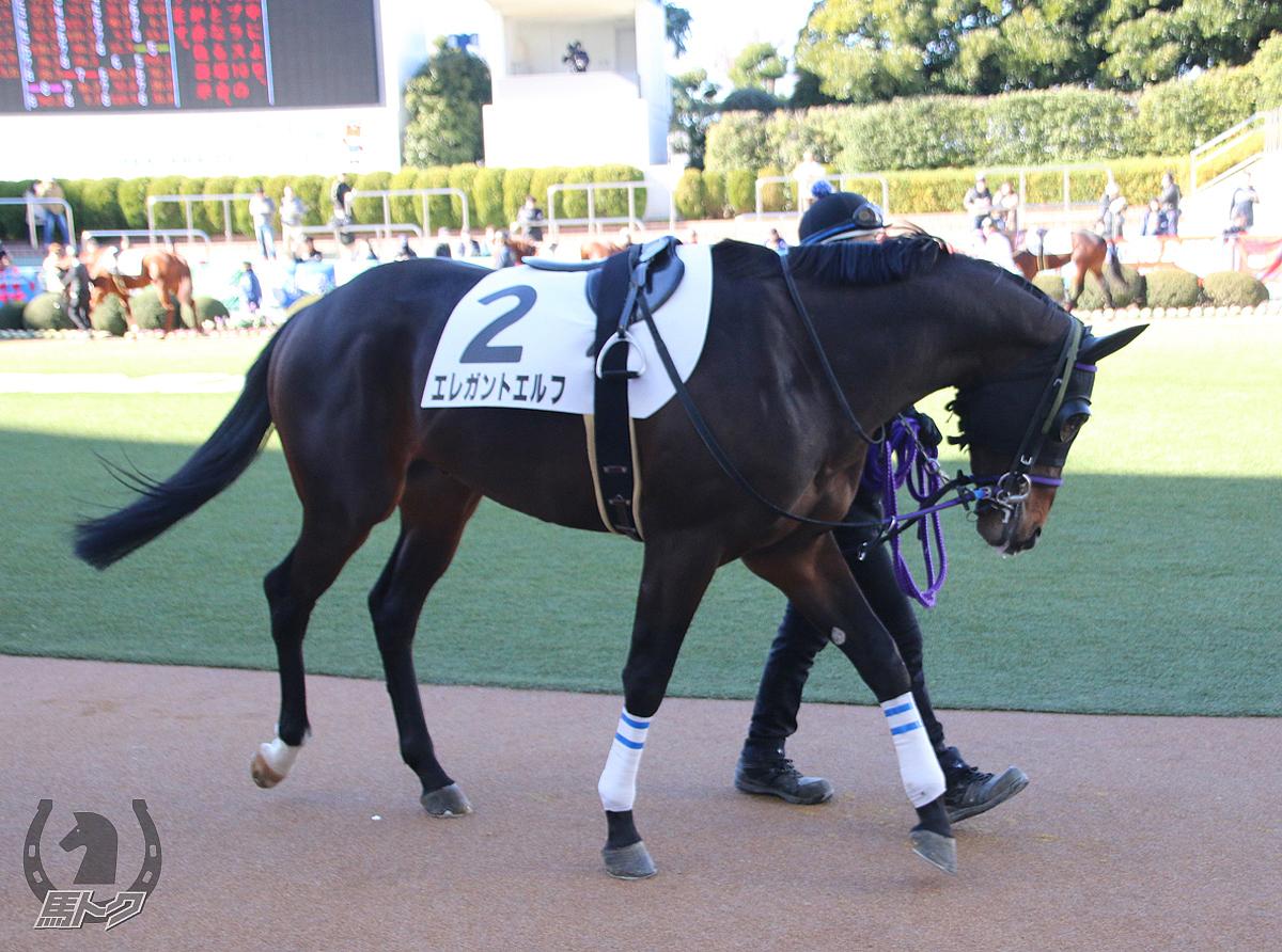 エレガントエルフの馬体写真