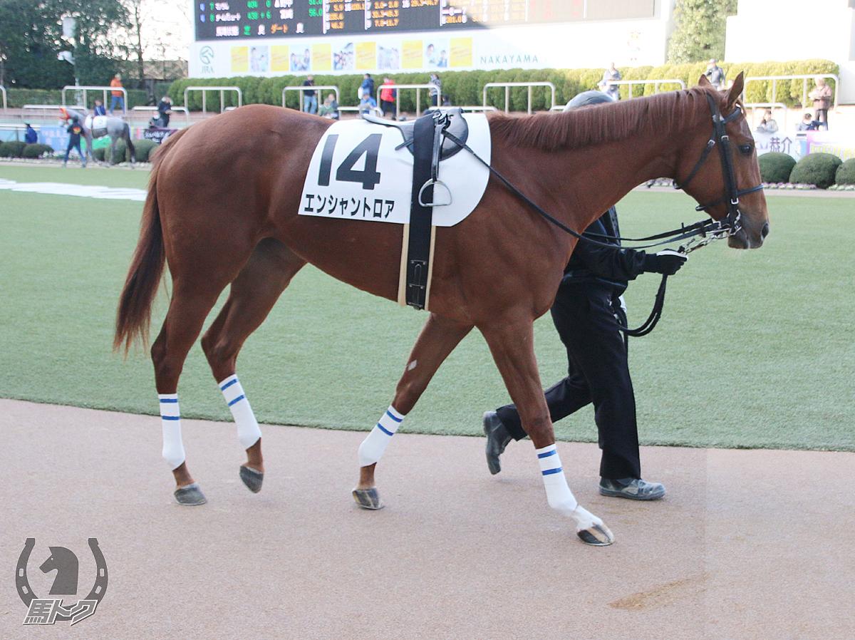 エンシャントロアの馬体写真