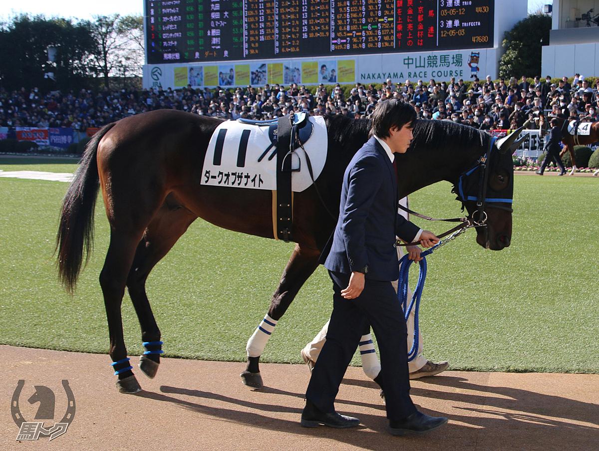 ダークオブザナイトの馬体写真