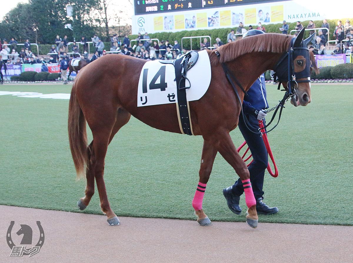 リゼの馬体写真