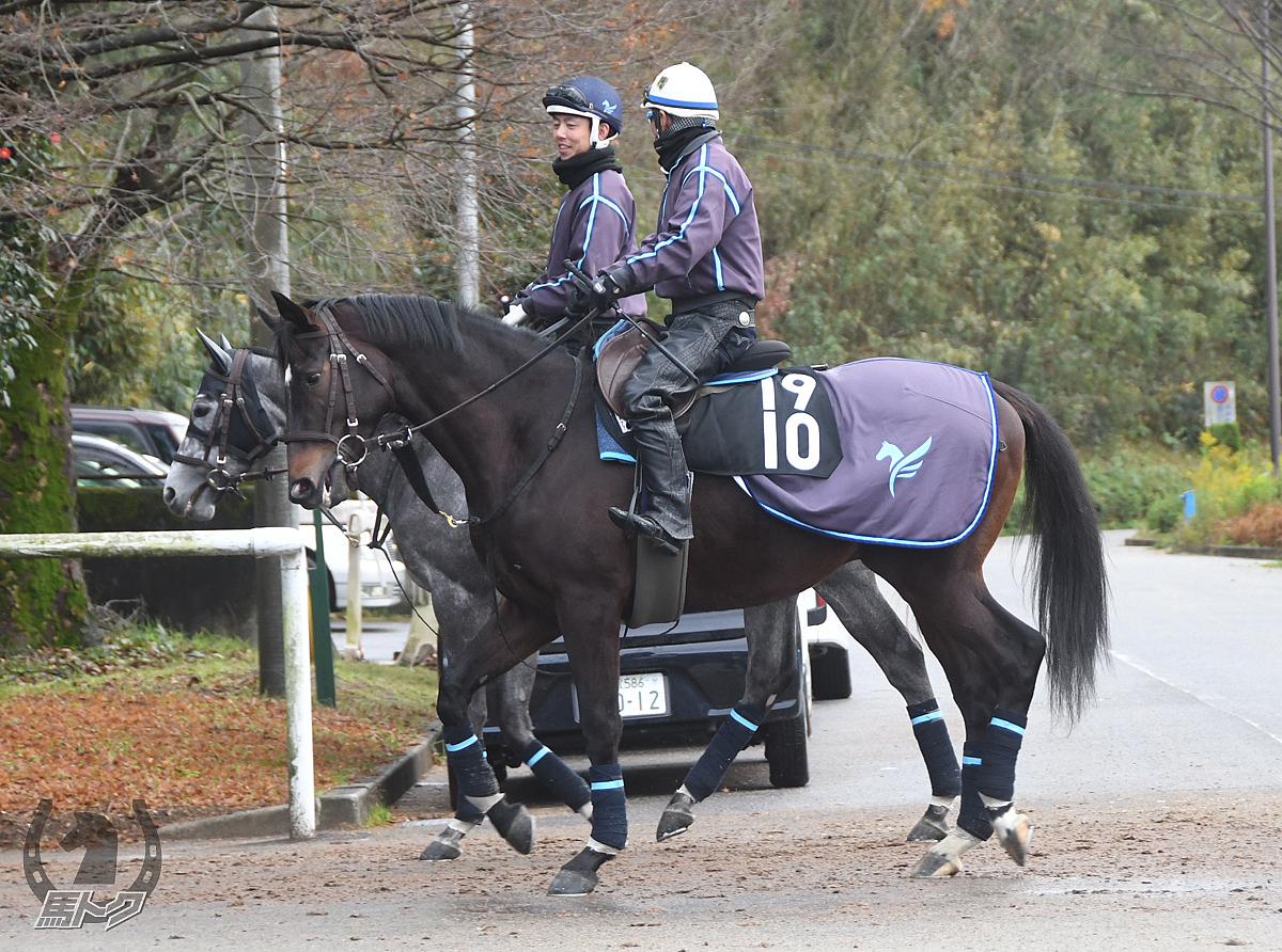 ホウオウスクリーンの馬体写真