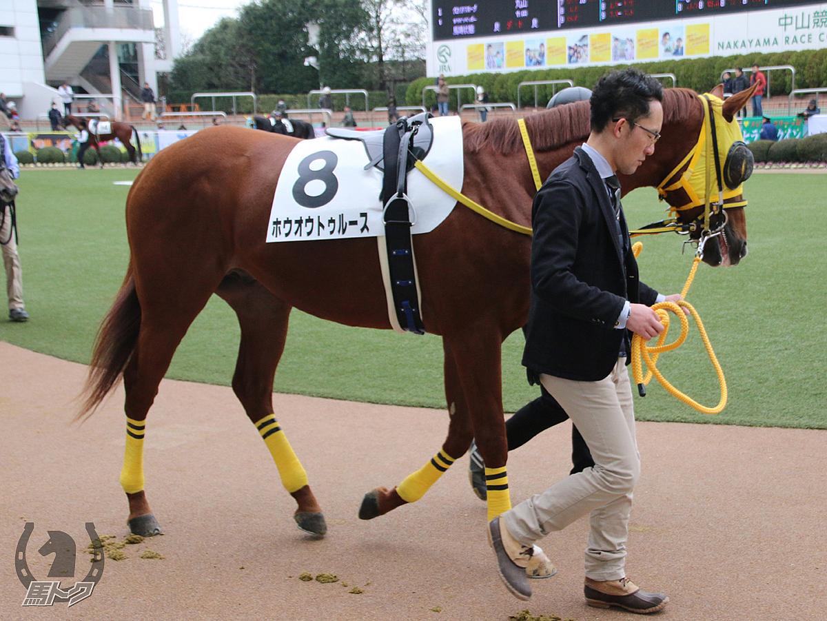 ホウオウトゥルースの馬体写真