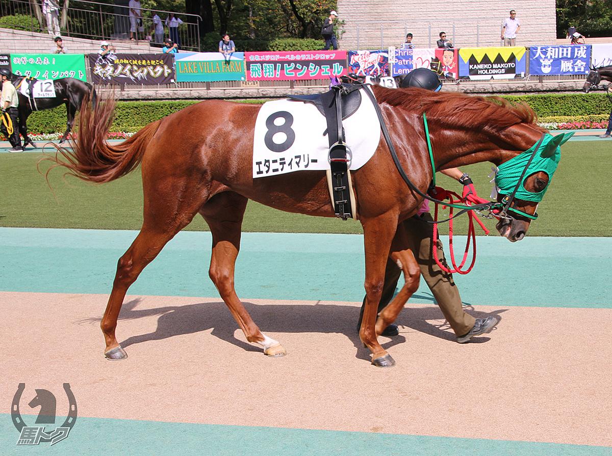 エタニティマリーの馬体写真
