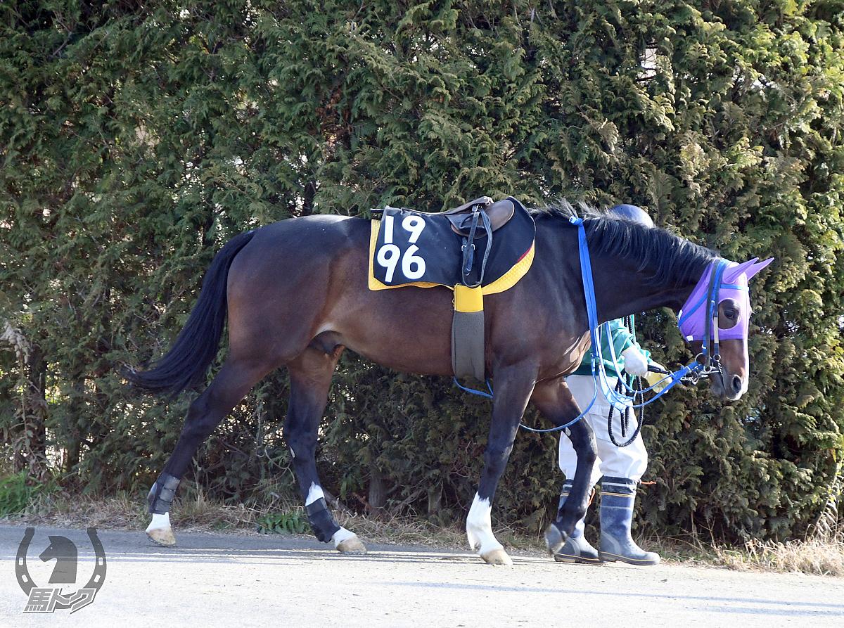 ワンダーボーイの馬体写真