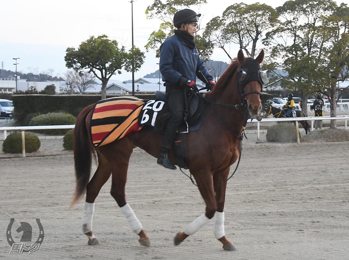 ルミエールソレイユの馬体写真