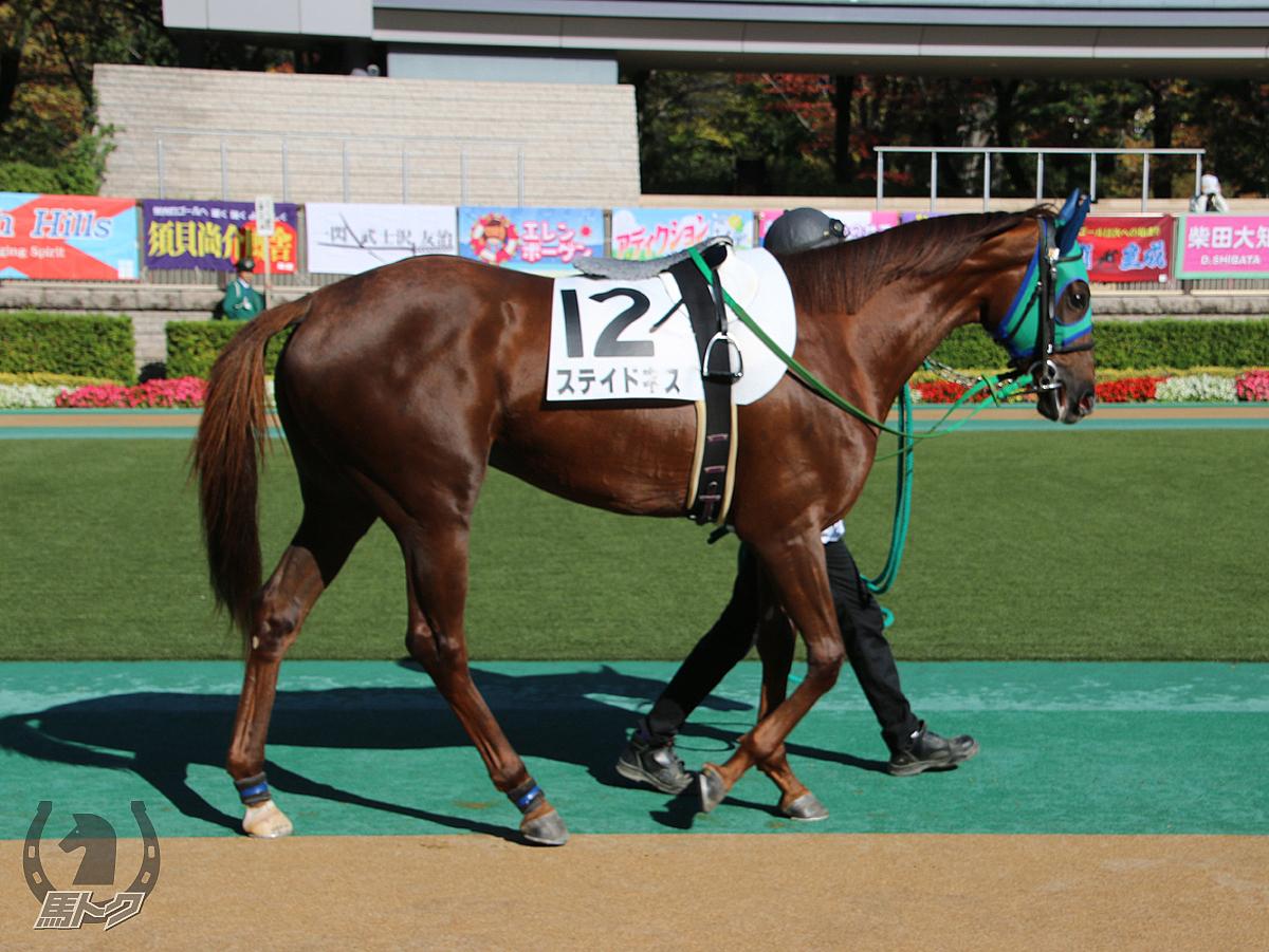 ステイドネスの馬体写真