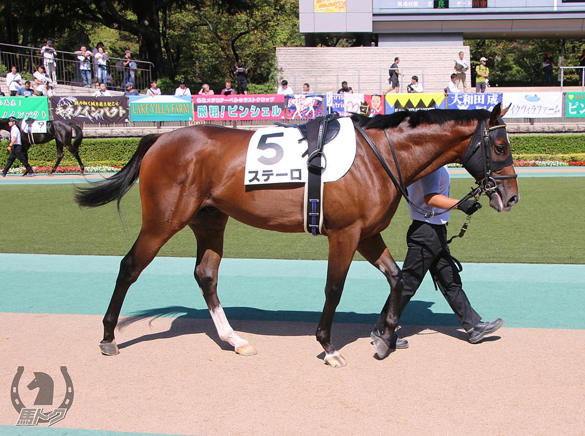 ステーロの馬体写真