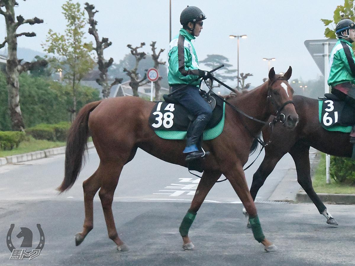 ラルムエトワールの馬体写真
