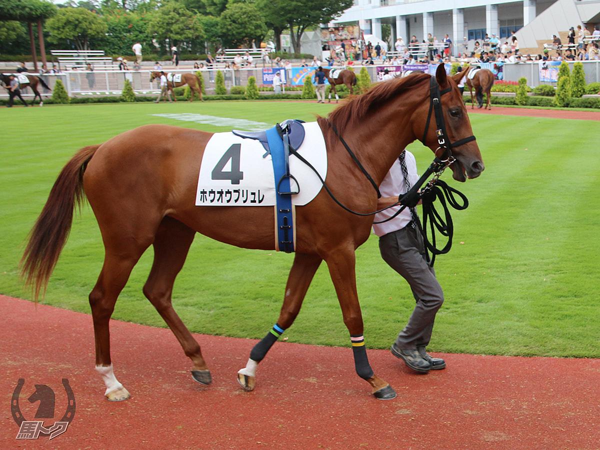 ホウオウブリュレの馬体写真