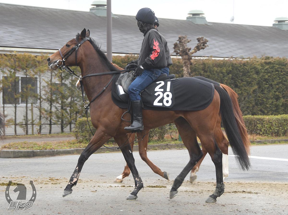 リトルウィッチの馬体写真