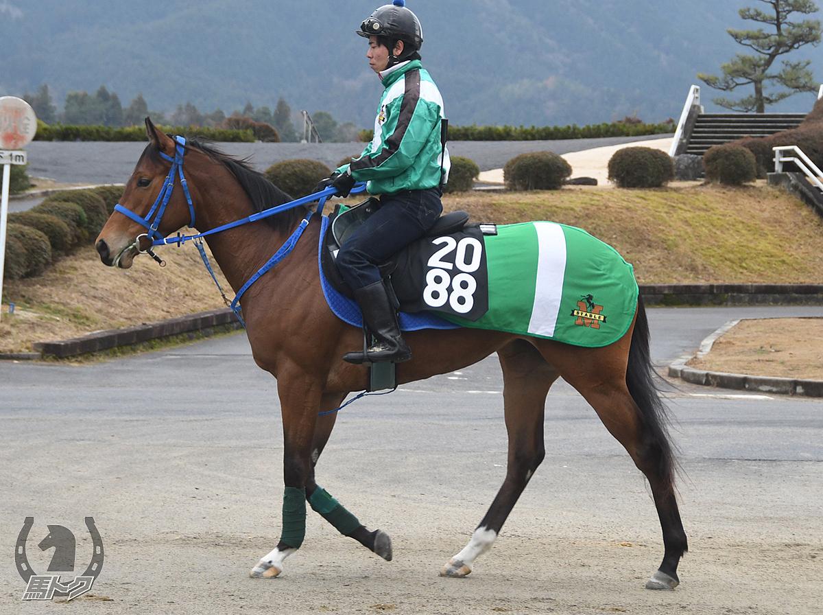 ファルネーゼブルーの馬体写真
